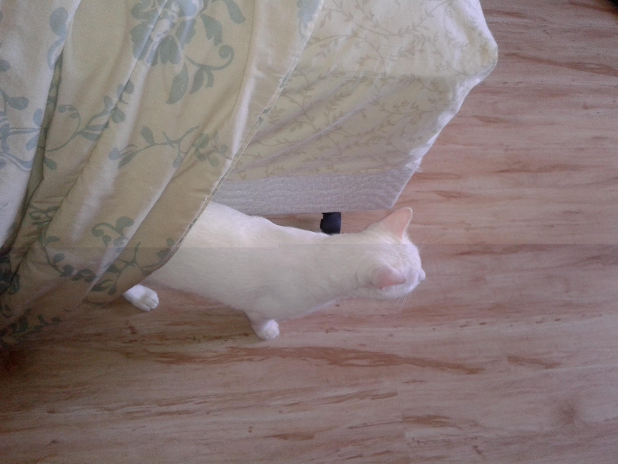 gato cama