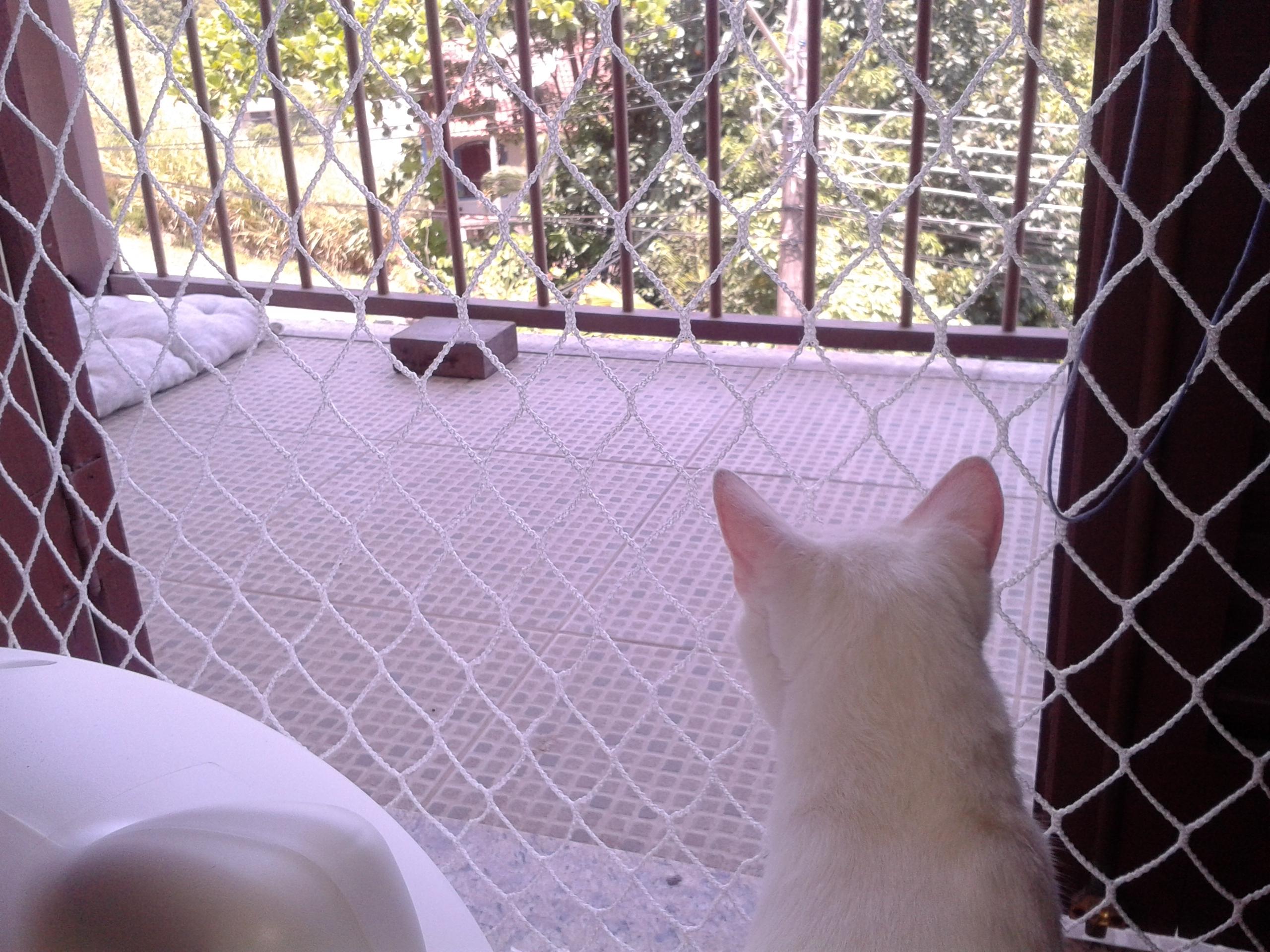 gato olhando