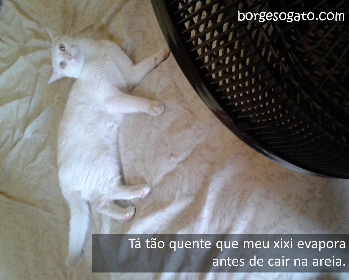 calor2