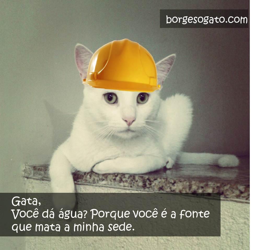 pedreiro gato9
