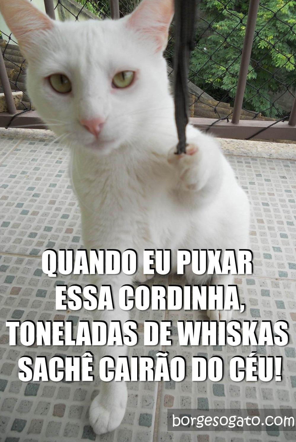 cordinha