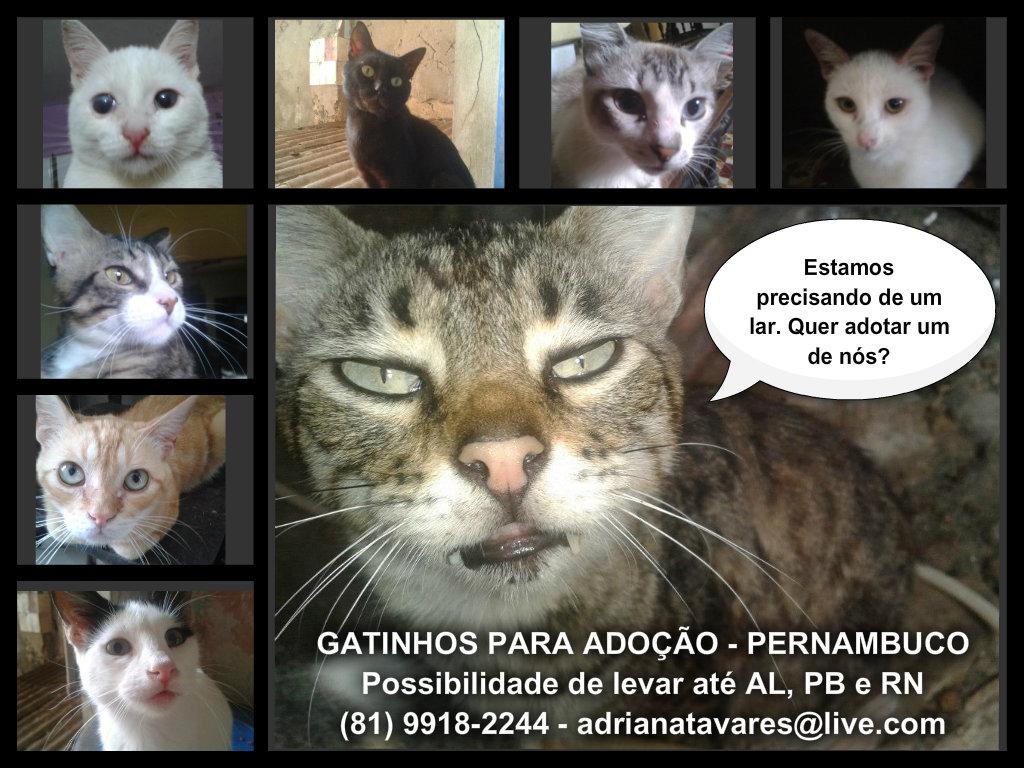 que estão sendo usadas na divulgação dos gatinhos para adoção #7E6D4D 1024x768 Banheiro Adequado Para O Gato