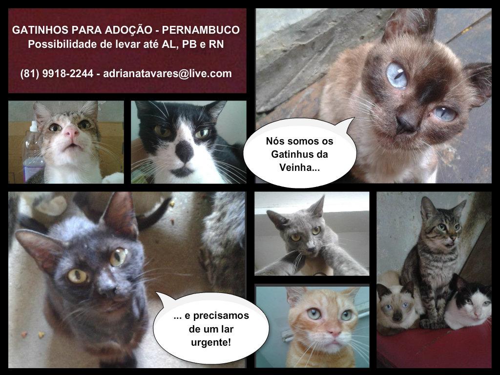 Gatinhos da Veinha - adocao 2