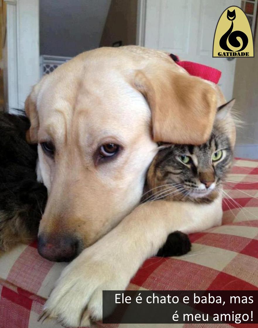 gato_e_cachorro