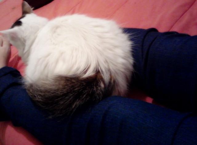 Matilde senta no colo