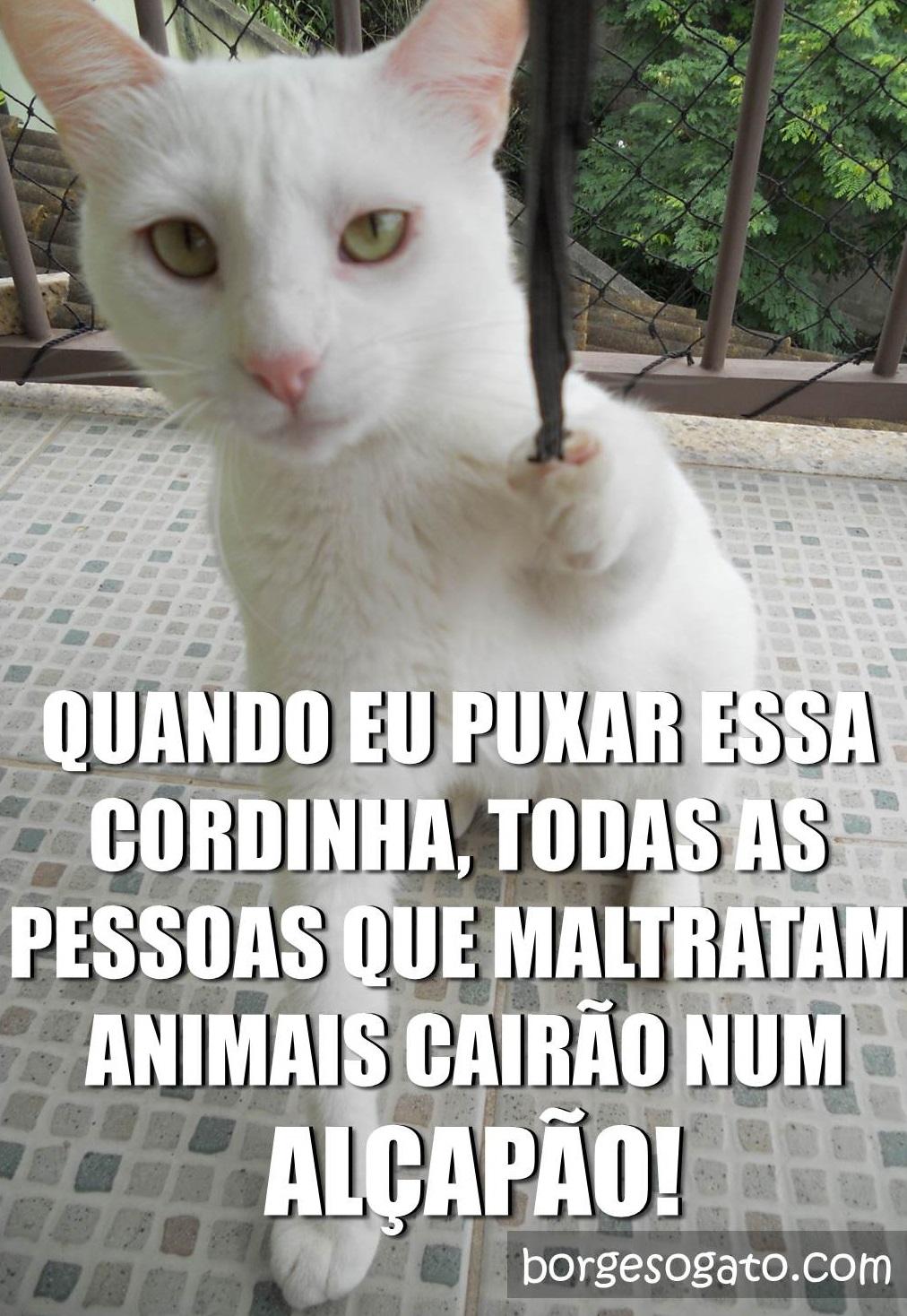 cordinha2