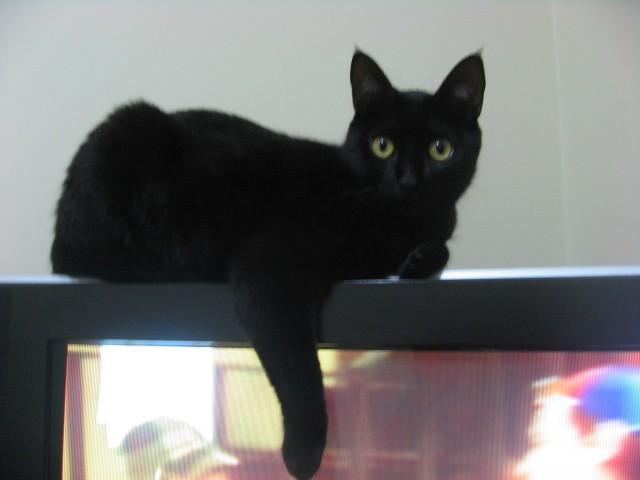 gatinhas e caixas-05-2012 018