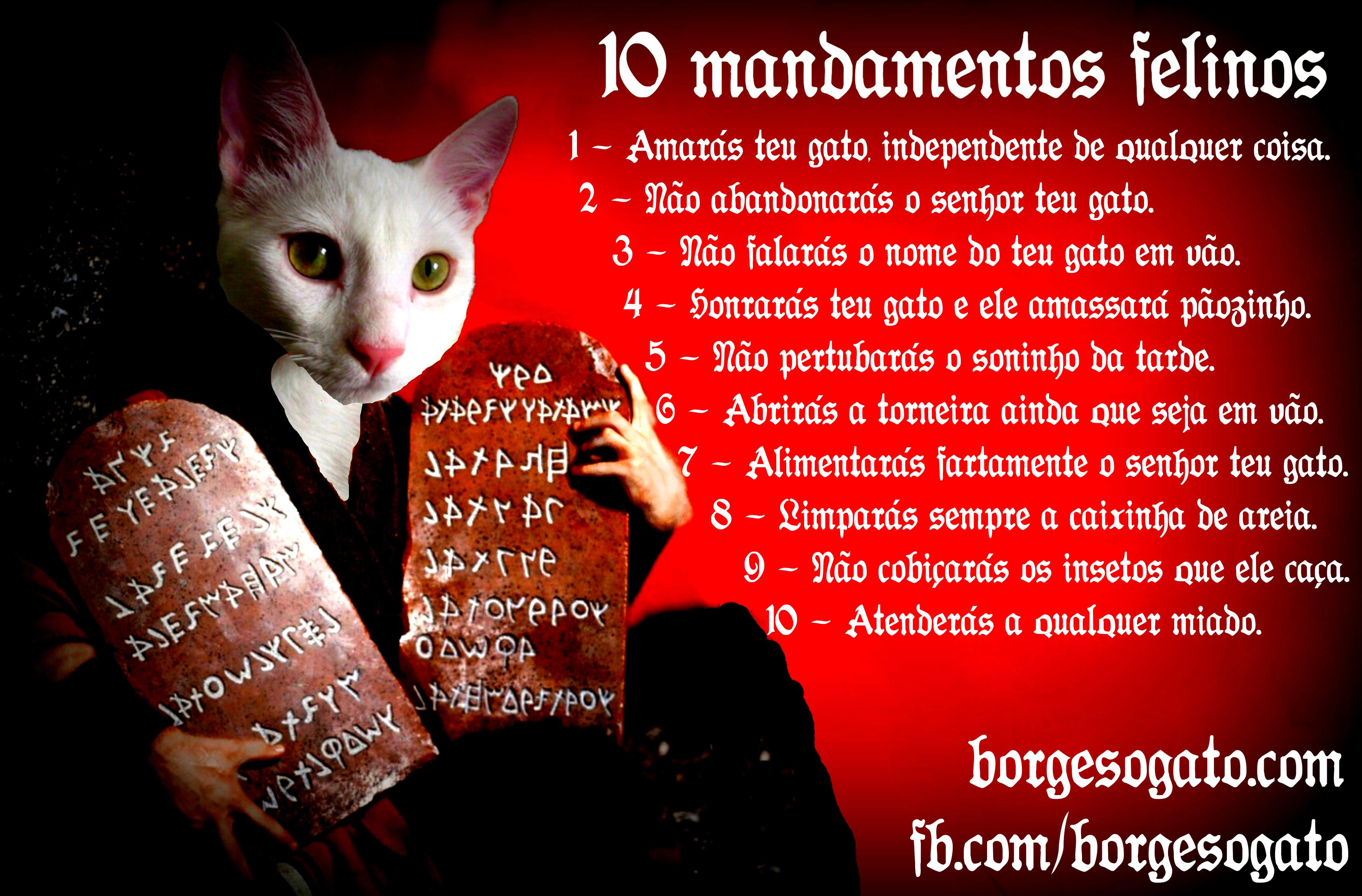 10 mandamentos felinos2