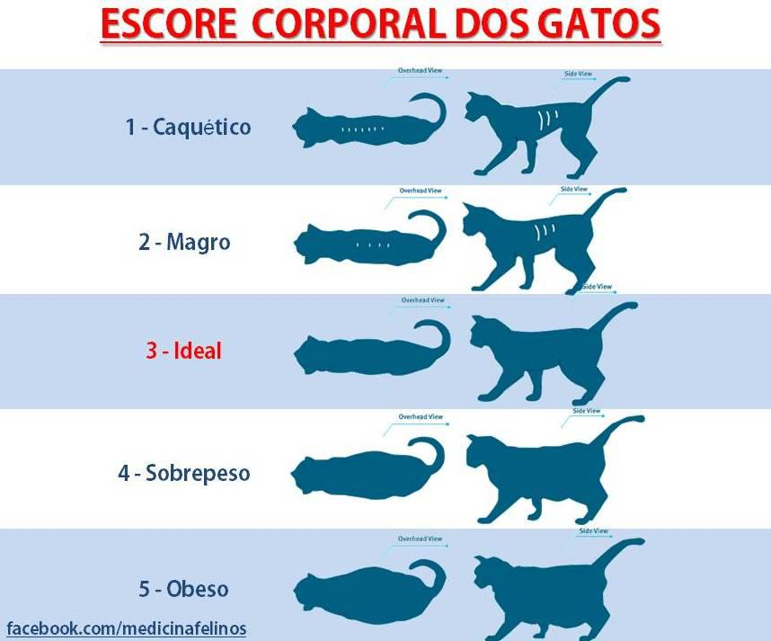 escore-corporal-dos-gatos-medicina-felina