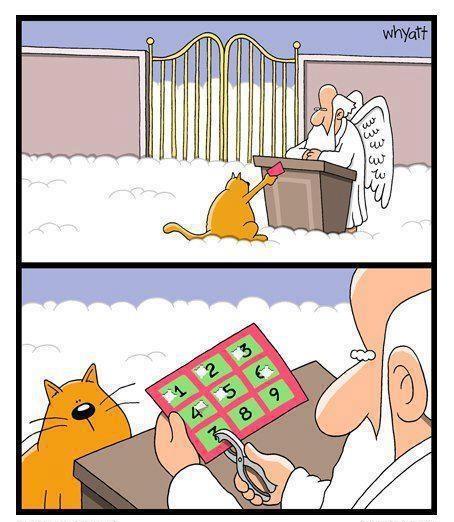 gato-veja