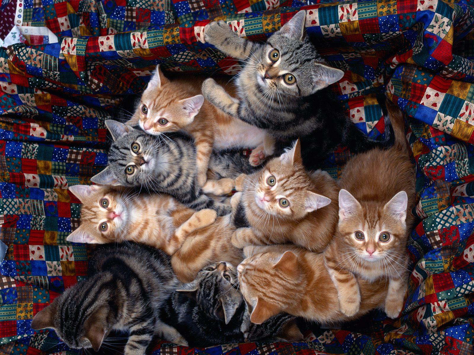 Cat's_family
