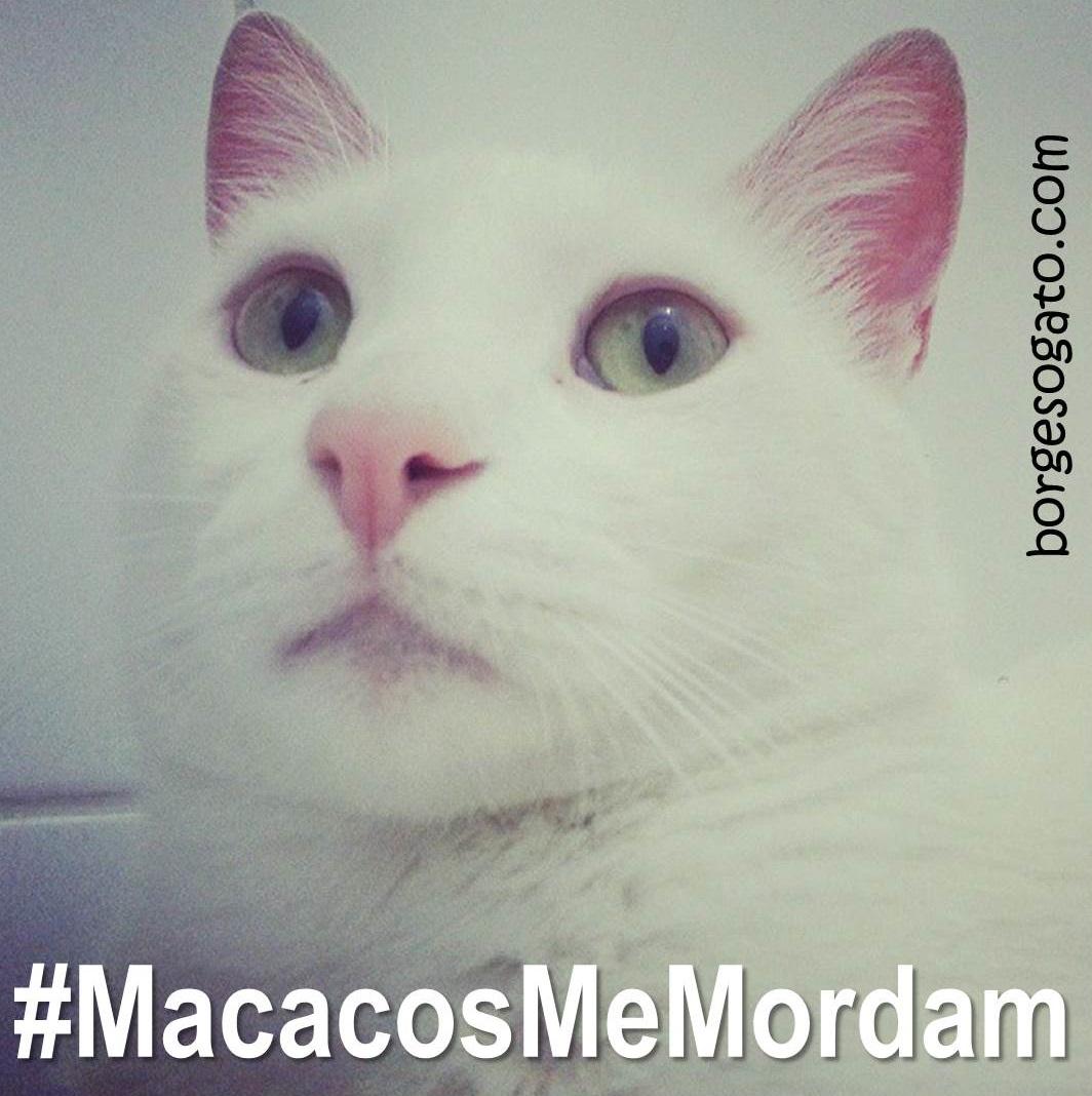 macacos_me_mordam