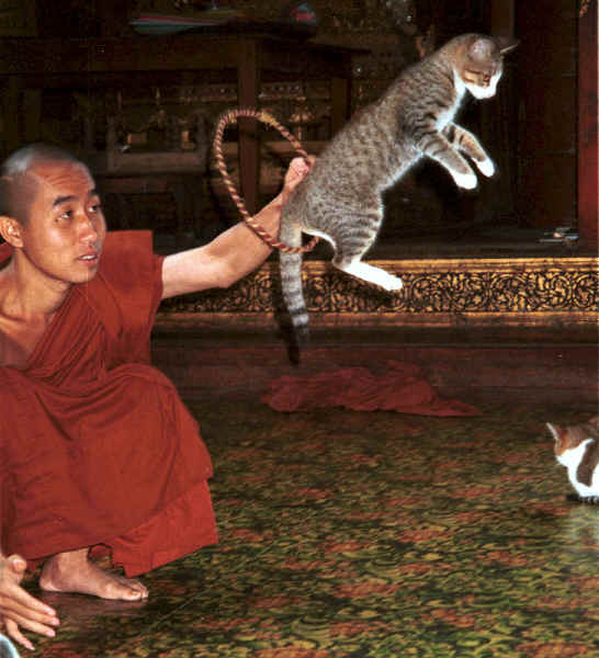jpeg-39k-a-cat-jumping-through-a-hoop-for-one-of-the-monks-at-nga-phe-kyaung-monastery-lake-inle-shan-state-myanmar-9809q18