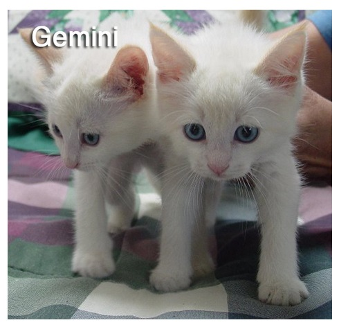 cats-of-zodiac-wildammo-3