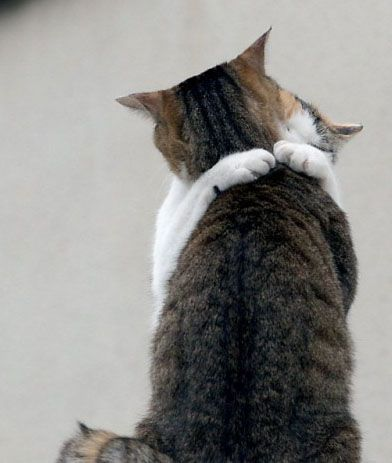 cats-hugging-11162010-01
