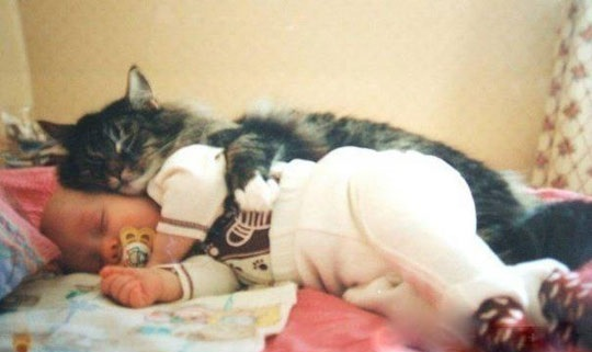 funny-cat-sleeping-with-baby-hug