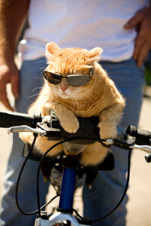 Cat-on-a-Bike