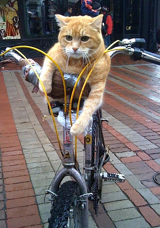 CatBike