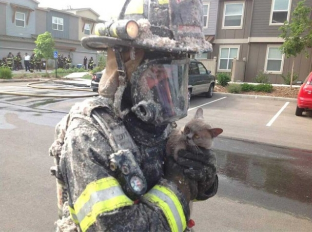 Firefighter-cat-save