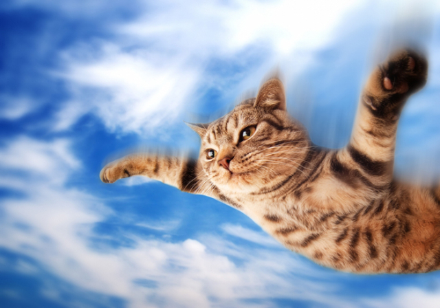 I-Believe-I-Can-Fly-Cat1