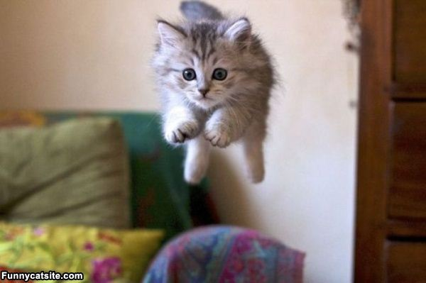 Funny Cat Pictures : http://www.funnycatsite.com/