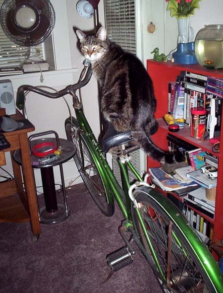 bicycle cat.1