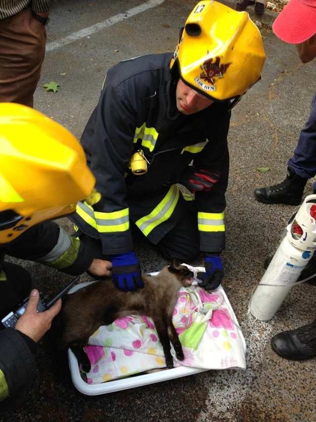 cat+humanity.+Firefighters+save+a+cat+from+a+housefire.+He_593721_4715749