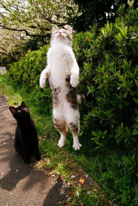 cat-fly