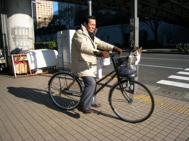 cat-in-bike-basket