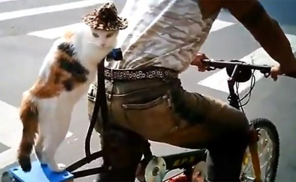 cat-on-a-bike-600x369