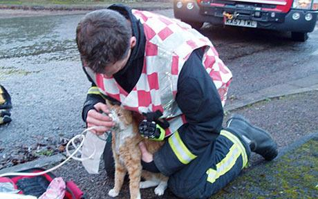 firemen-save-cats_1213114c