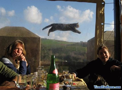 flying-cat-optical-illusion