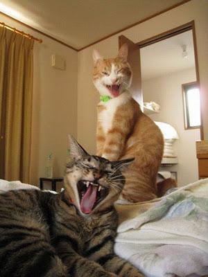 gato rindo 5
