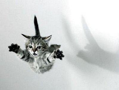 gato107