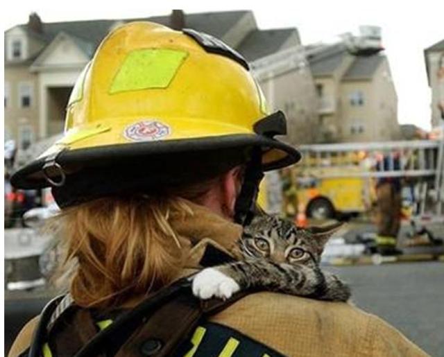 gatos-mi-amigo el bombero JPG