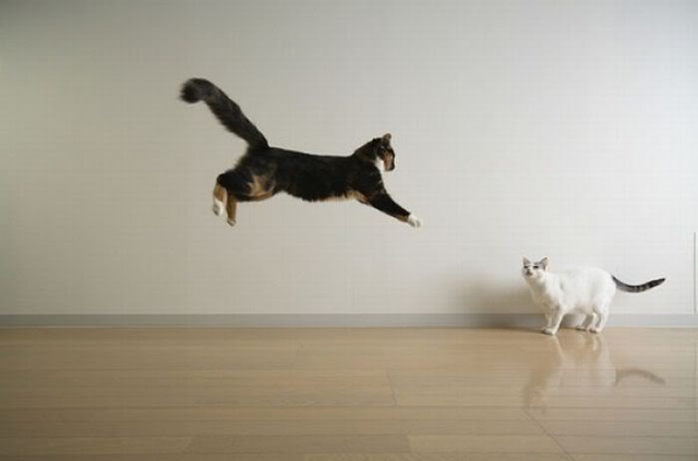 jumping_and_flying_cats_02