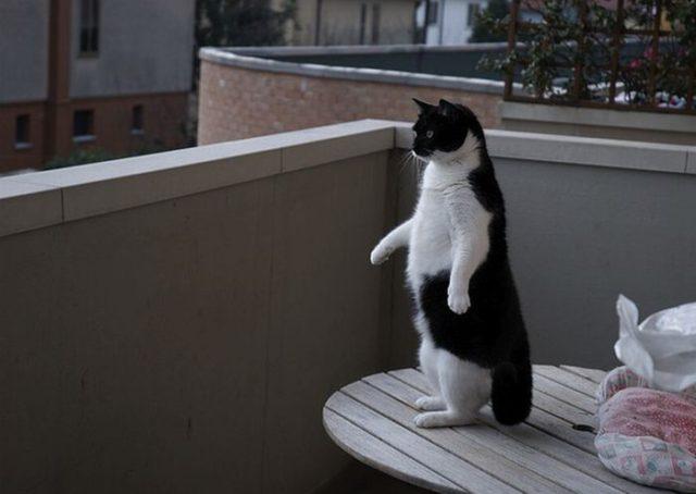 standup-cat