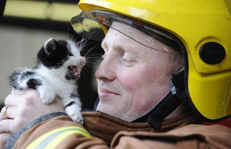 the-rescued-kitten-with-firefighter-mike-jenkins-27673229