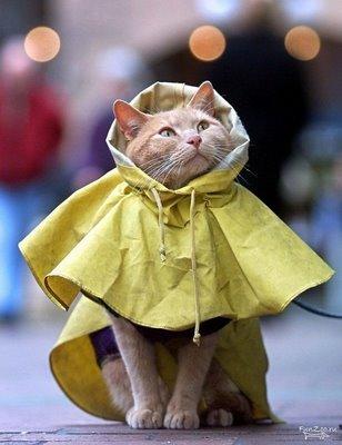 Capa de chuva gato