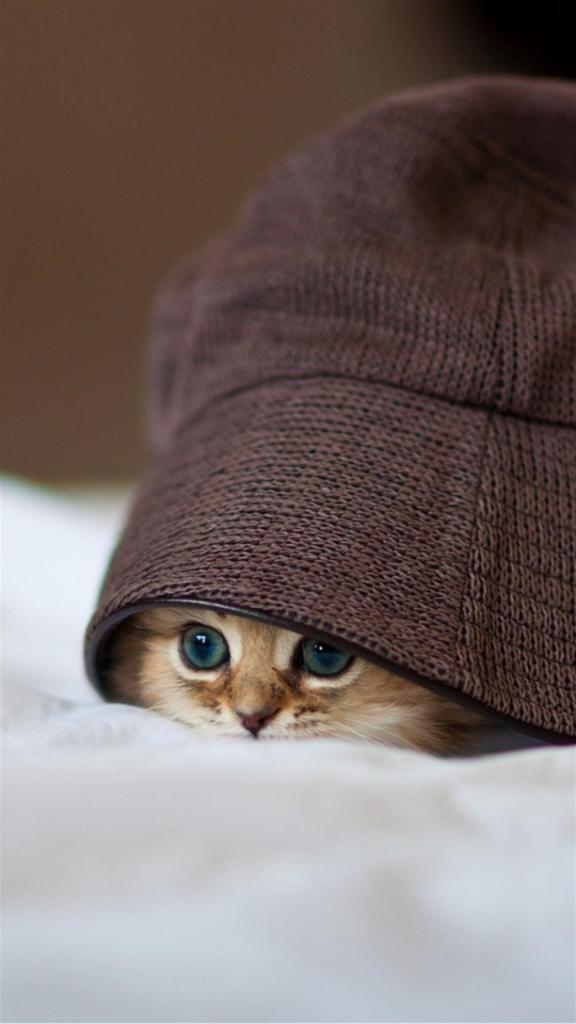 Hidden cat Galaxy Note 3 Wallpapers