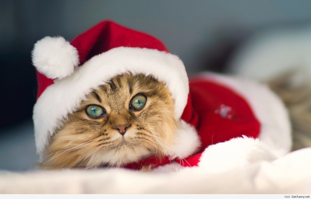 Santa-Claus-now-is-cat