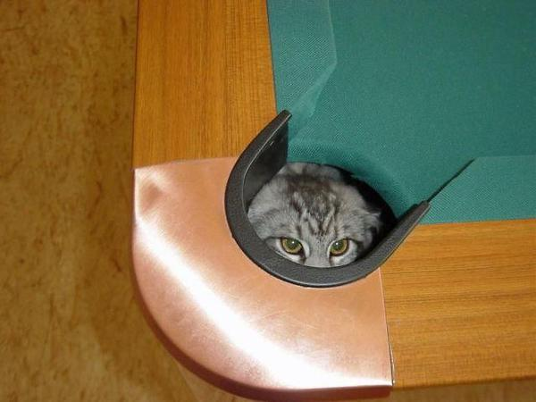 a.baa-cat-hidden-pool-table
