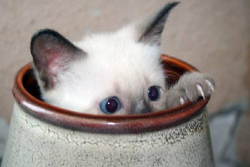 art-of-hiding-cat-in-flower-vase