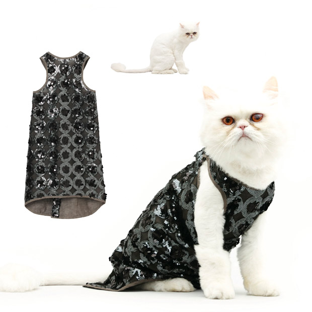cat-fashion-Januar_1773586i