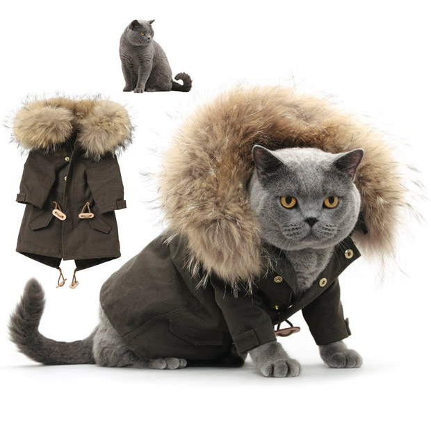 cat-fashion-decemb_1773594i