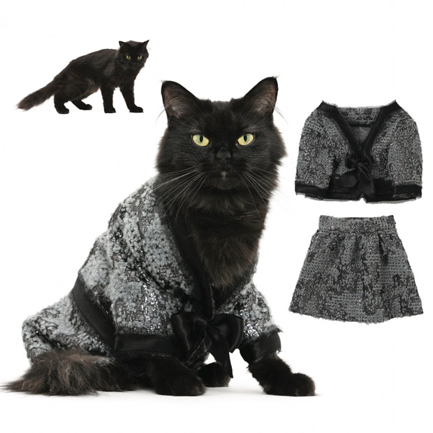 cat-fashion-septem_1773575i