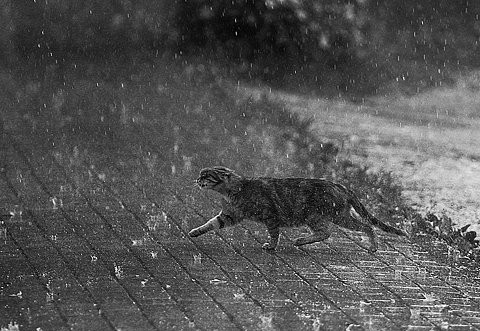 cat-in-the-rain-27