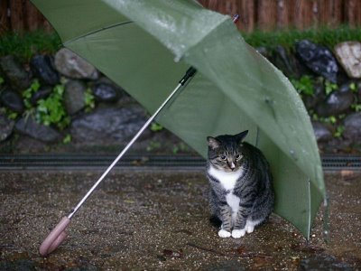gato_com_guarda-chuva
