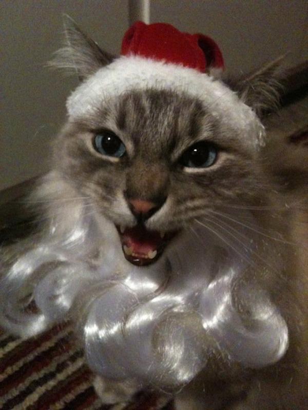 santa-claus-cat-11