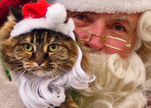 santa-with-christmas-cat